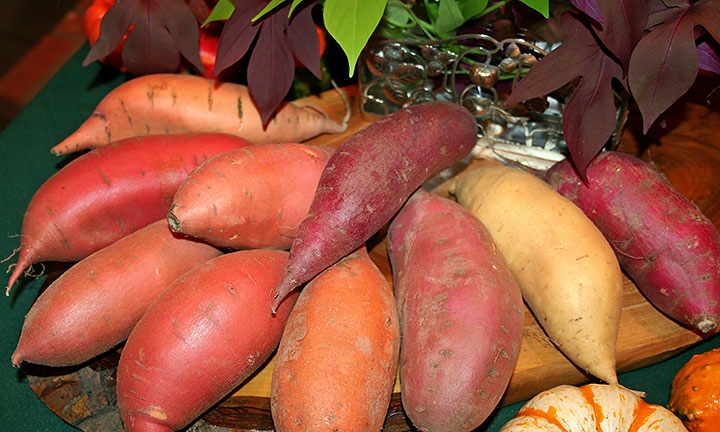 nutritious-sweet-potatoes-NCSPC